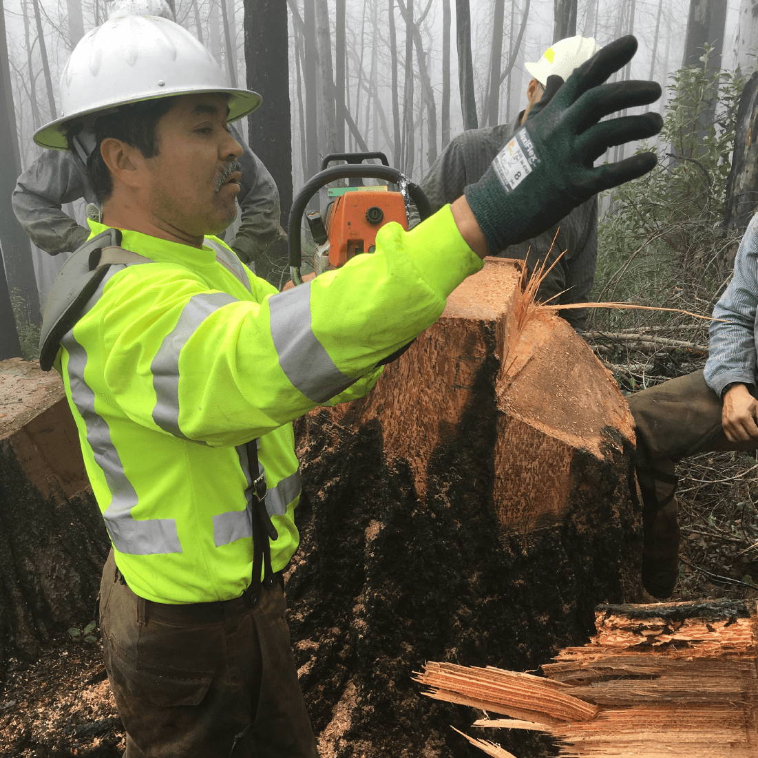 Instruction in the field during a double-cut tree felling course.