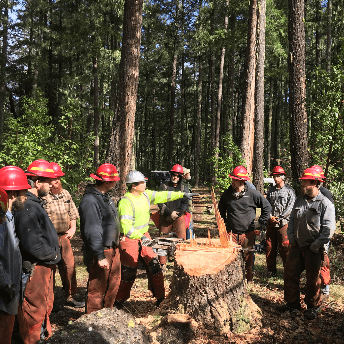 Instruction in the field of intermediate-advanced cut tree felling course.