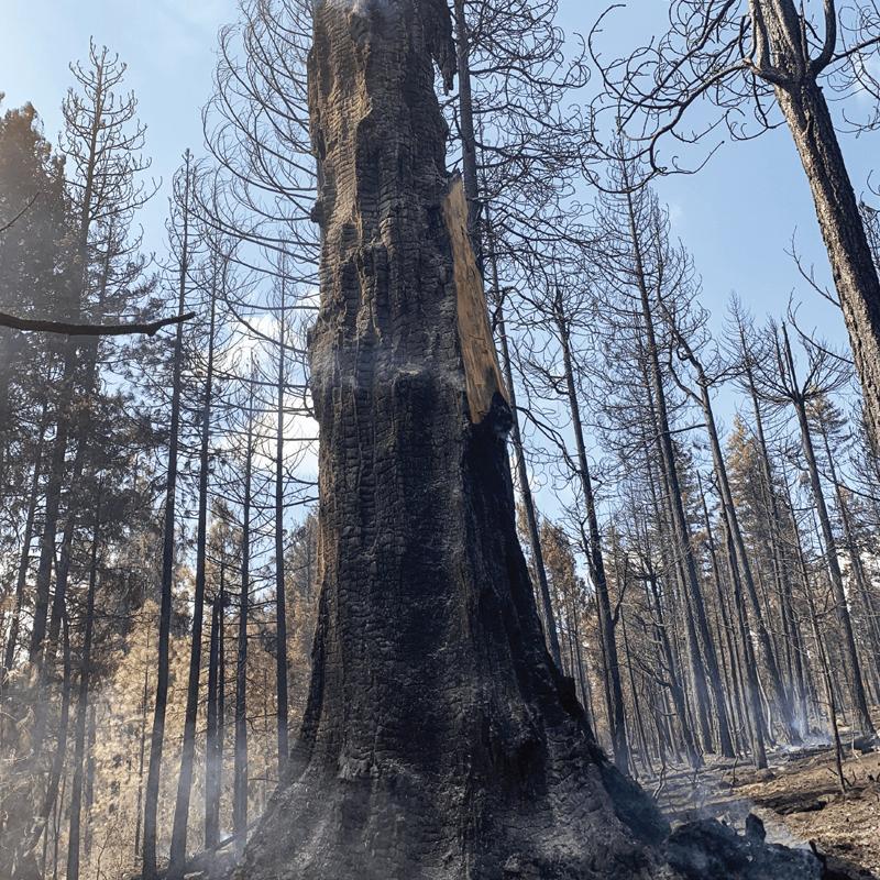 Fire Weakened Timber Seminar